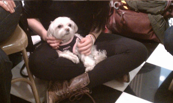 <p>  Therapy Dog on Stress Down Day</p>